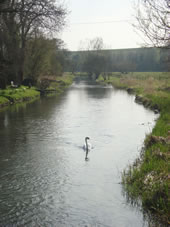 Enford House cottage is close to the River Avon.   Fishing is available at additional charge